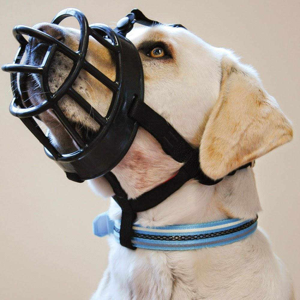 Hundepaarungen